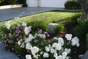 curb appeal flower bed IB