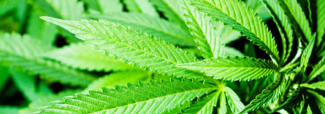 marijuana-legislation-election